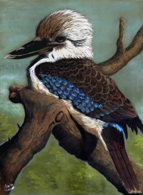 Blue-winged kookaburra on a tree limb