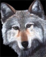 Timber wolf head